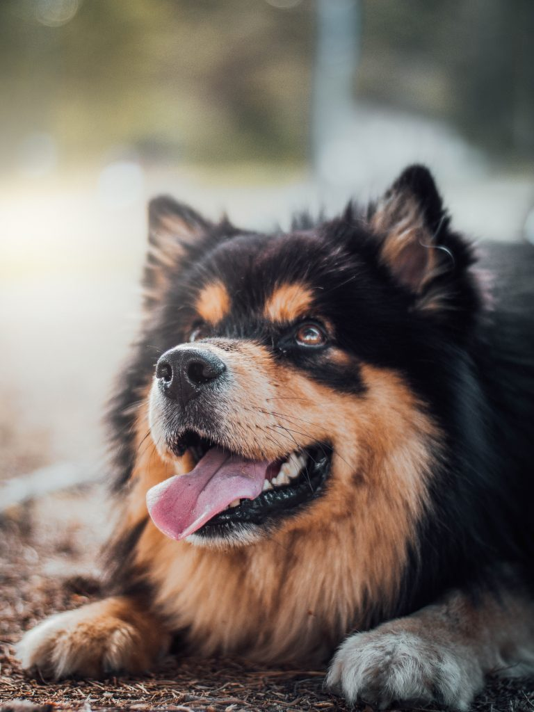 balancing a multivitamin with your dogs diet