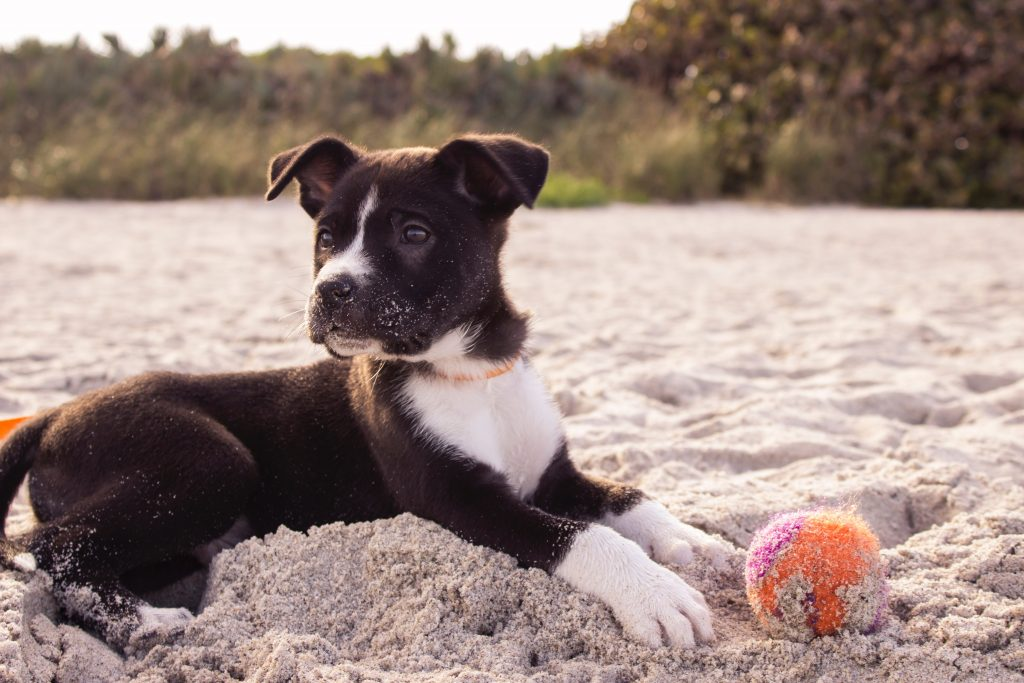 dog in the sand in dog-friendly places to visit