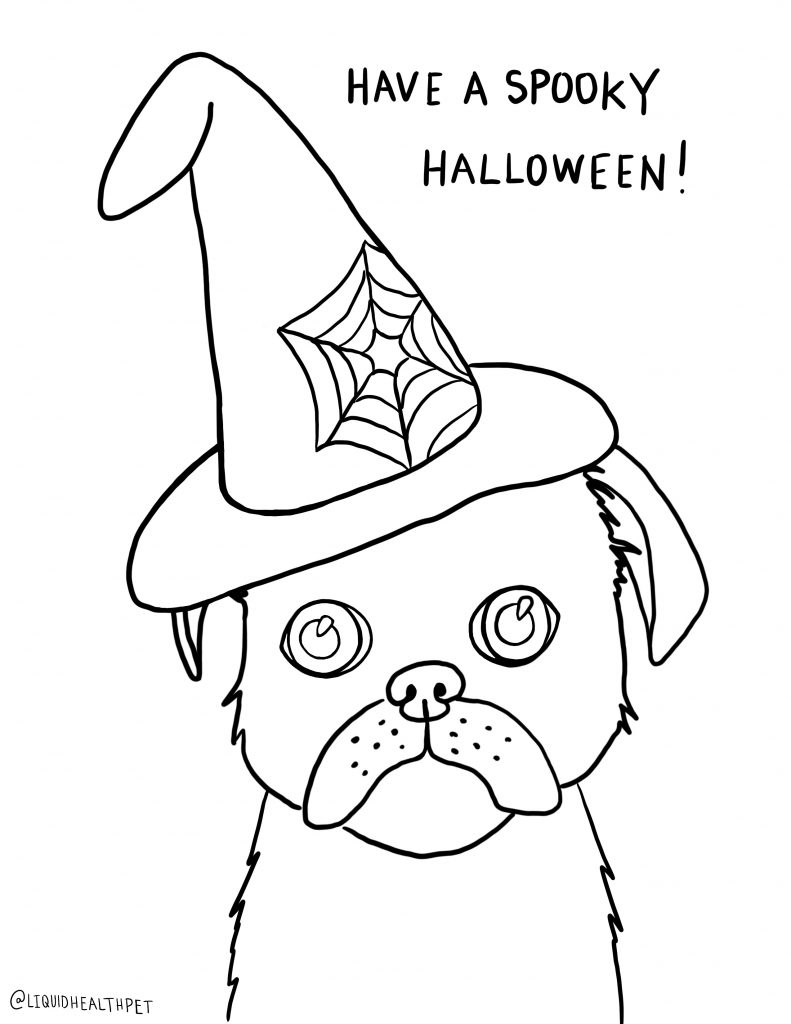 pug in a witch hat