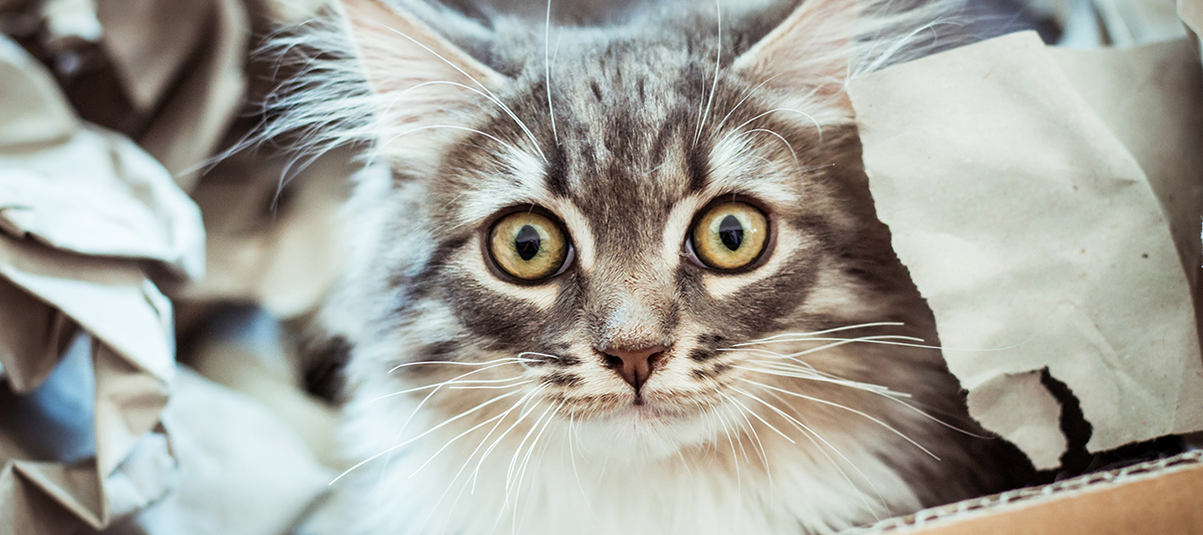 featured image for weird cat behavior and what it means